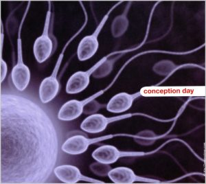 conception_day